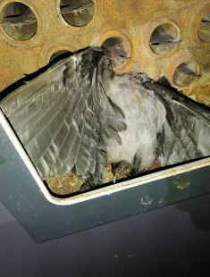 Птахи в котлах